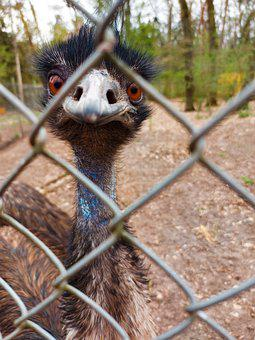 Emu, Flightless Bird, Fence, Cage, Demarcation