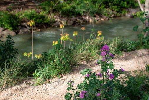 Mallow, Flowers, Trail, Malva, Bloom, Malvaceae, Plant