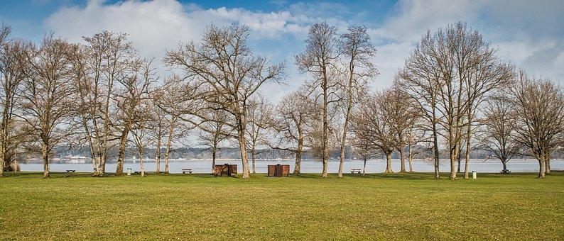 Lake, Bank, Row Of Trees, Trees, Nature, Grass, Park