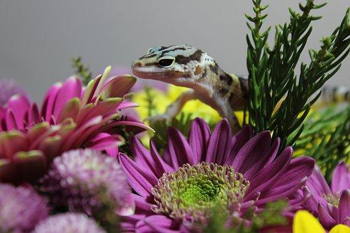 Flowers, Flora, Fauna, Plants, Petals, Beauty, Lizard