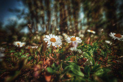 Meadow, Grass, Flowers, White Flowers, Bloom, Blossom