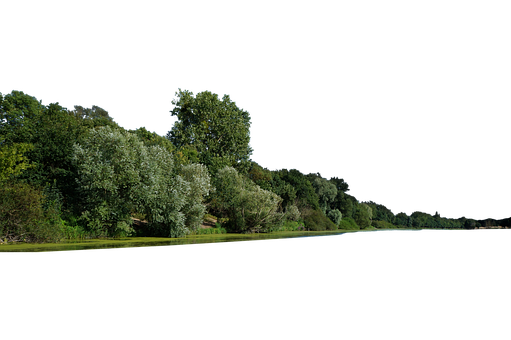 Trees, River, Forest, Nature, Woods, Woodlands, Cut Out