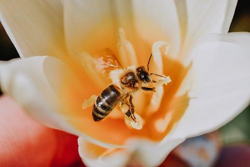 Bee, Flower, Pollen, Pollinate, Pollination, Petals