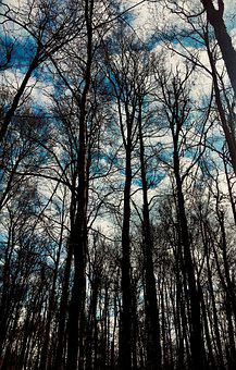 Trees, Sky, Forest, Woods, Woodlands, Undergrowth