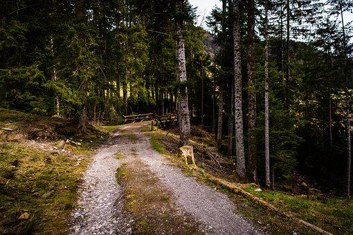 Forest, Path, Trees, Woods, Woodlands, Trail, Nature