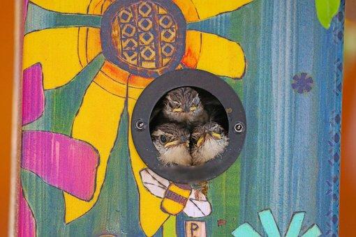 Chicks, Carolina Wrens, Birds, Birdhouse, Hatched