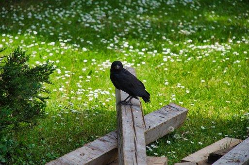 Crow, Bird, Wood, Perched, Blackbird, Animal, Wildlife