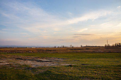 Field, Landscape, Sunset, Sheep, Herd, Flock, Meadow