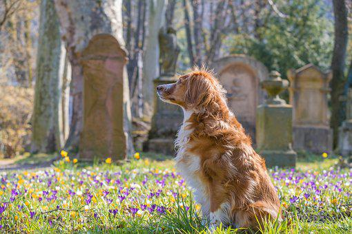 Dog, Pet, Furry, Graveyard, Cemetery, Young
