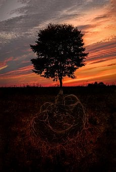 Brain, Tree, The Roots Of The, The Background, Mind