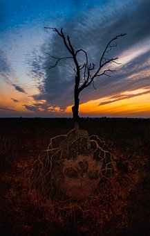 Skull, Tree, The Roots Of The, Death, The Background