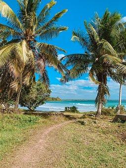 Beach, Palm Trees, Coast, Trail, Path, Sea, Ocean, Palm