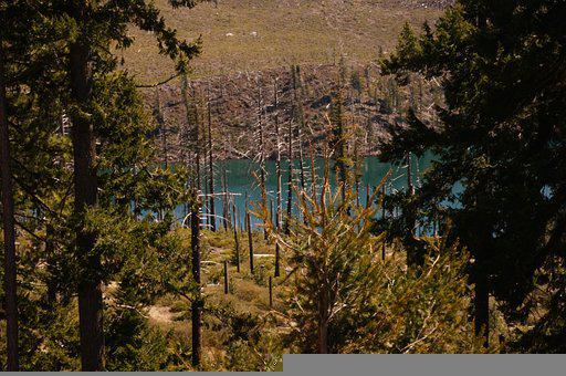 Trees, River, Mountains, Conifers, Coniferous