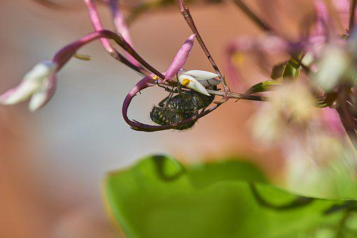 Flower Beetles, Insects, Flower, Plant, Spring, Garden