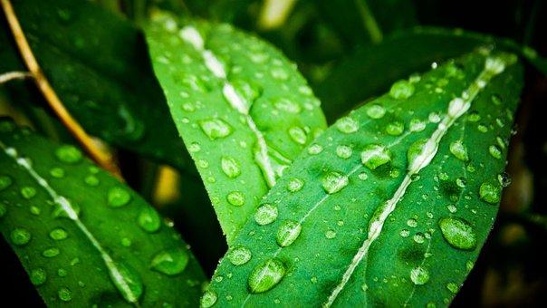 Leaves, Plant, Dew, Wet, Dewdrops, Raindrops