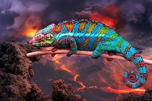 Chameleon, Animal, Rock, Reptile, Lizard, Wildlife