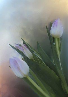 Tulips, Bouquet, Flowers, Floral, Plant, Nature, Flora