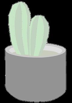 Cactus, Pot, Plant, Succulent, Potted Plant
