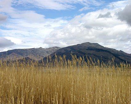 Desert, Shoshone, California, Grass, Wind, Landscape