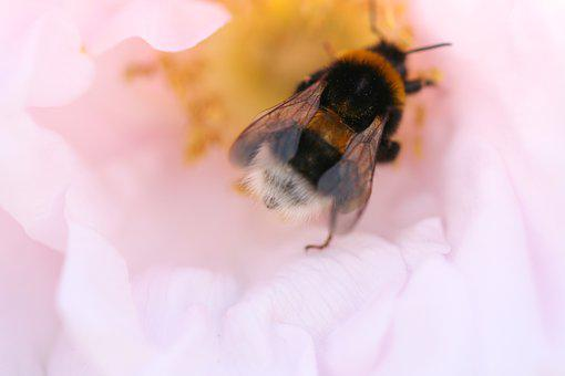 Flower, Bee, Pollen, Pollinate, Pollination, Insect