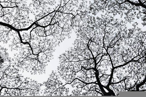 Tree, Branches, Twigs, Perspective, Sky, Forest, Nature