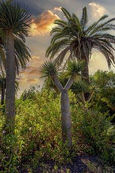 Gardens, Botanical, Vegetation, Plants, Trees, Flowers