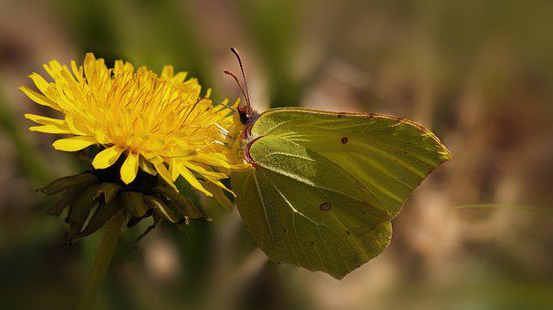 Yellow Flower, Butterfly, Pollinate, Pollination
