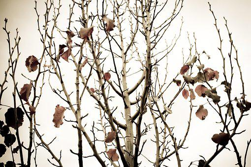 Pear Tree, Branches, Tree, Autumn, Autumn Leaves