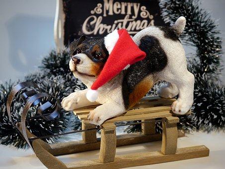 Christmas, Dog, Winter, Animal World, Christmas Dog