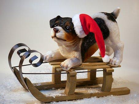 Christmas, Dog, Christmas Dog, Christmas Time