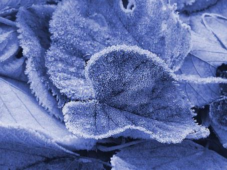 Lipovina, Frozen, Blue, Winter, Cold, Hoarfrost, Purple