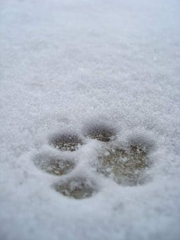 Imprint, Paw Print, Snow, Print, Paw, Dog, Winter