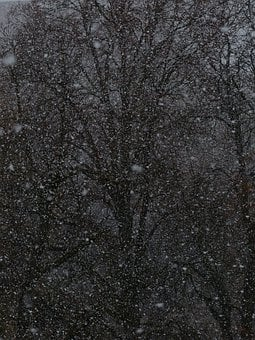 Blizzard, Snow Flurry, Snowflakes, Snowfall