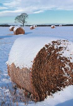 Hay, Bale, Straw, Agriculture, Field, Farm, Rural