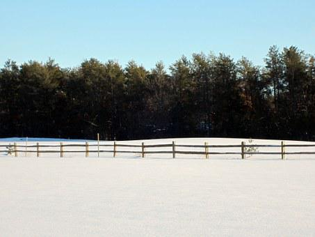 Winter, Field, Fence, Treelike, Blue Sky, Horizontal
