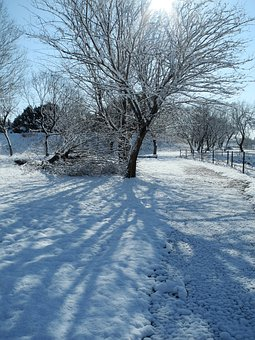 Snow, Winter, Trees, Snowy, Cold, Freezing, December