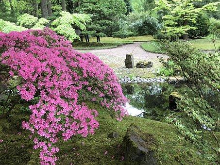 Park, Plants, Spring, Pond, Garden, Azaleas
