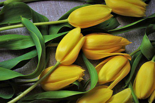 Tulips, Flowers, Mother's Day, Yellow Tulips, Bouquet