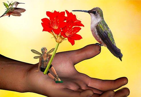 Fairies, Hummingbirds, Fantasy, Macro World