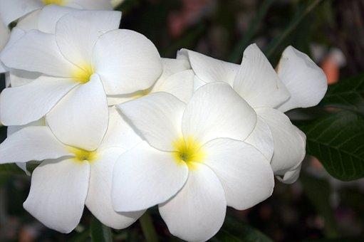 Flowers, Summer, Blue, Door, Decoration, Garden, Home
