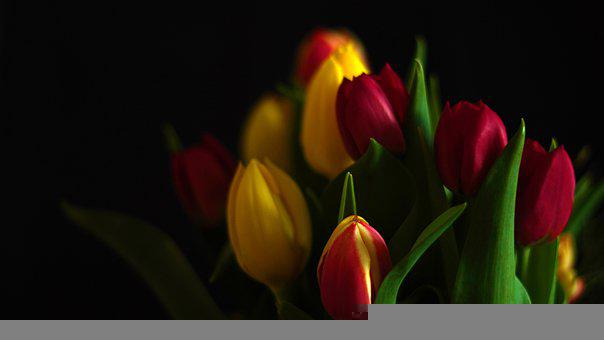 Tulips, Bouquet, Petals, Flowers, Spring, Nature