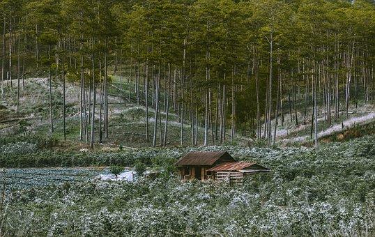 Trees, Forest, Hut, Cottage, Cabin, Woods, Woodlands