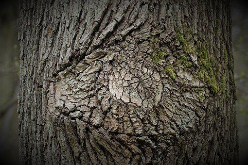 Tree, Bark, Texture, Trunk, Wood, Mystical, Forest