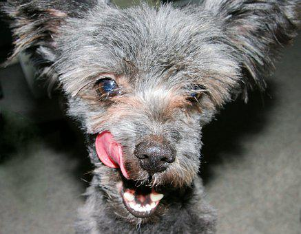 Dog, Pet, Animal, Puppy, Cute, Canine, Mammal, Domestic