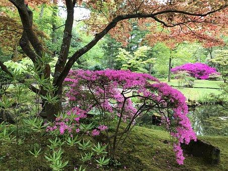 Park, Plants, Spring, Garden, Pond, Tree, Maple