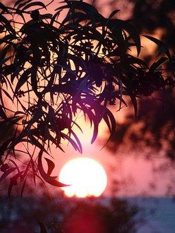 Sunset, Ocean, Leaves, Backlighting, Silhouettes