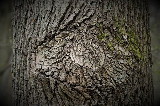 Tree, Bark, Eye, Tribe, Wood, Mystical, Forest, Nature