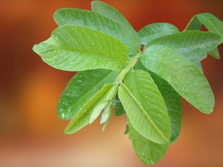 Leaves, Foliage, Water Droplets, Green, Plant, Branch