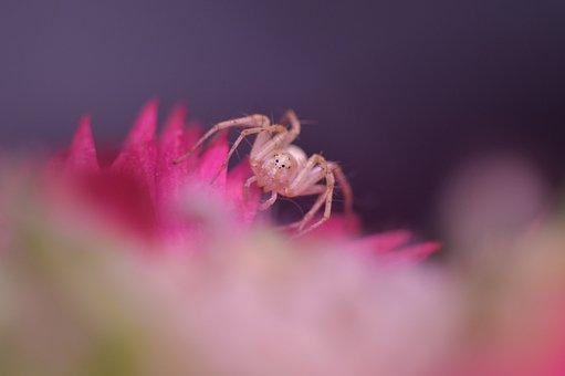 Spider, Macro, Arthropod, Arachnid, Arachnology