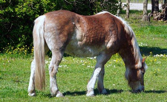 Horse, Animal, Pasture, Graze, Grazing, Brown Horse